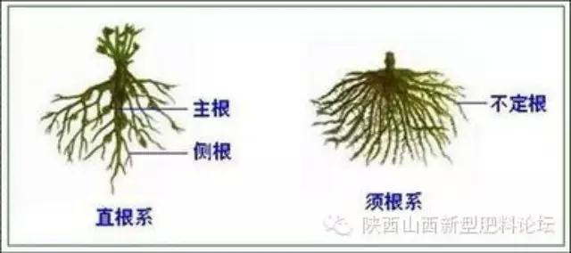 植物根系生长规律